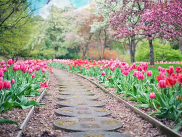 Bountiful Bouquets - Image Credit Jill Wellington Pixabay